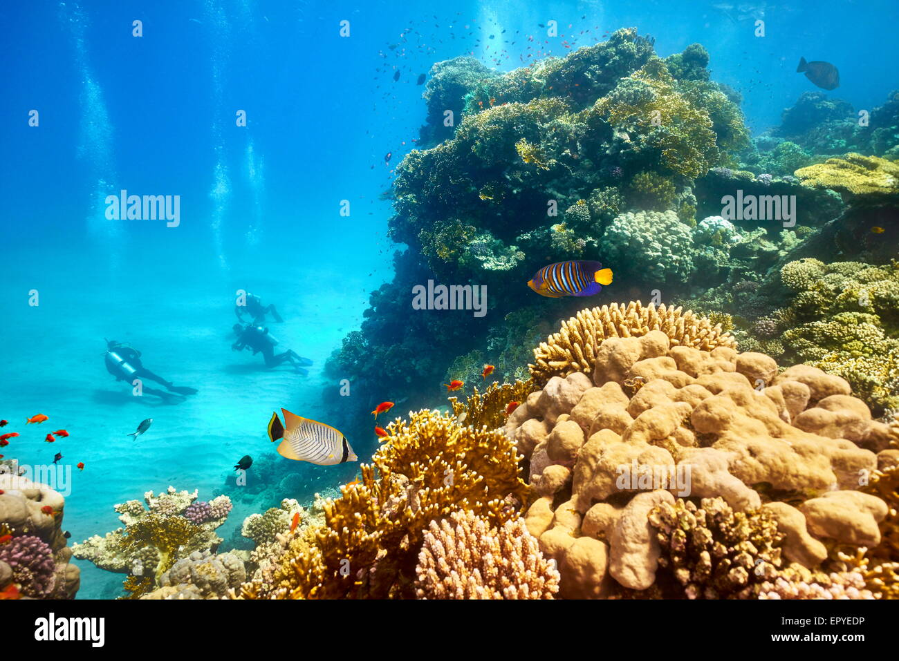 Red Sea - underwater view at scuba divers and the reef, Marsa Alam, Egypt - Stock Image