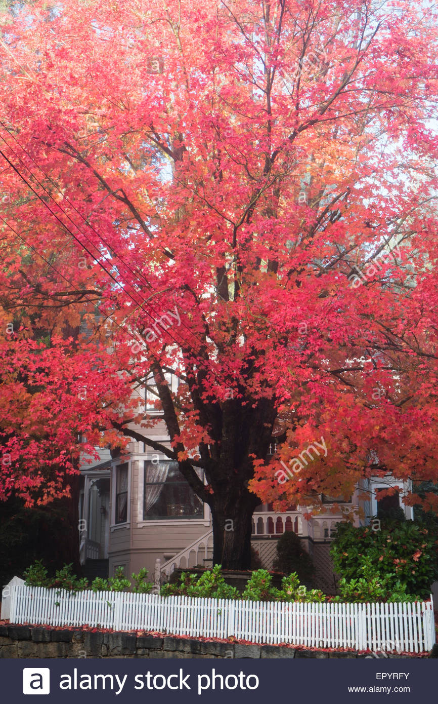 Fall Color and Victorian Home, Nevada City, California - Stock Image