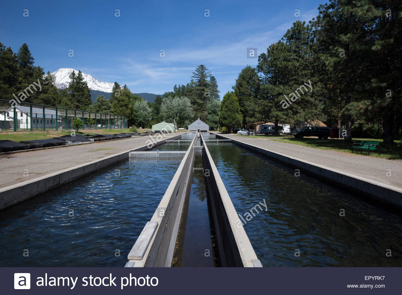 Mount Shasta Trout Hatchery, Mount Shasta, California - Stock Image