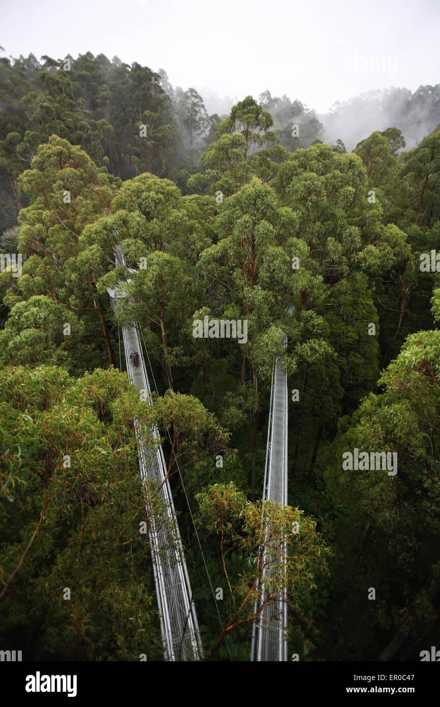 Otway fly treetop walkways. The Otway's, Victoria, Australia. - Stock Image