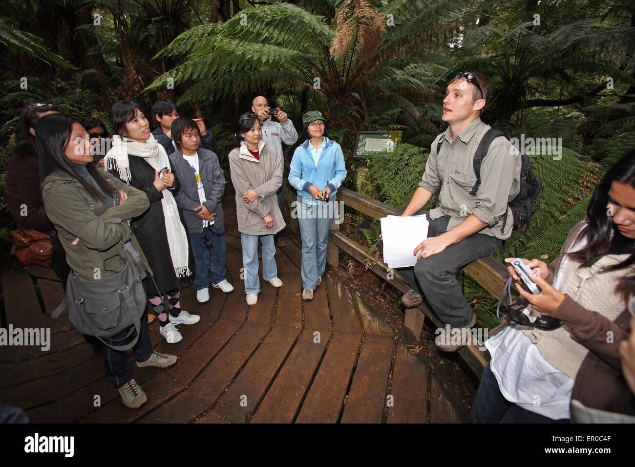 Tour guide at Maits Rest Rainforest Walk. The Otway's, Victoria, Australia. - Stock Image