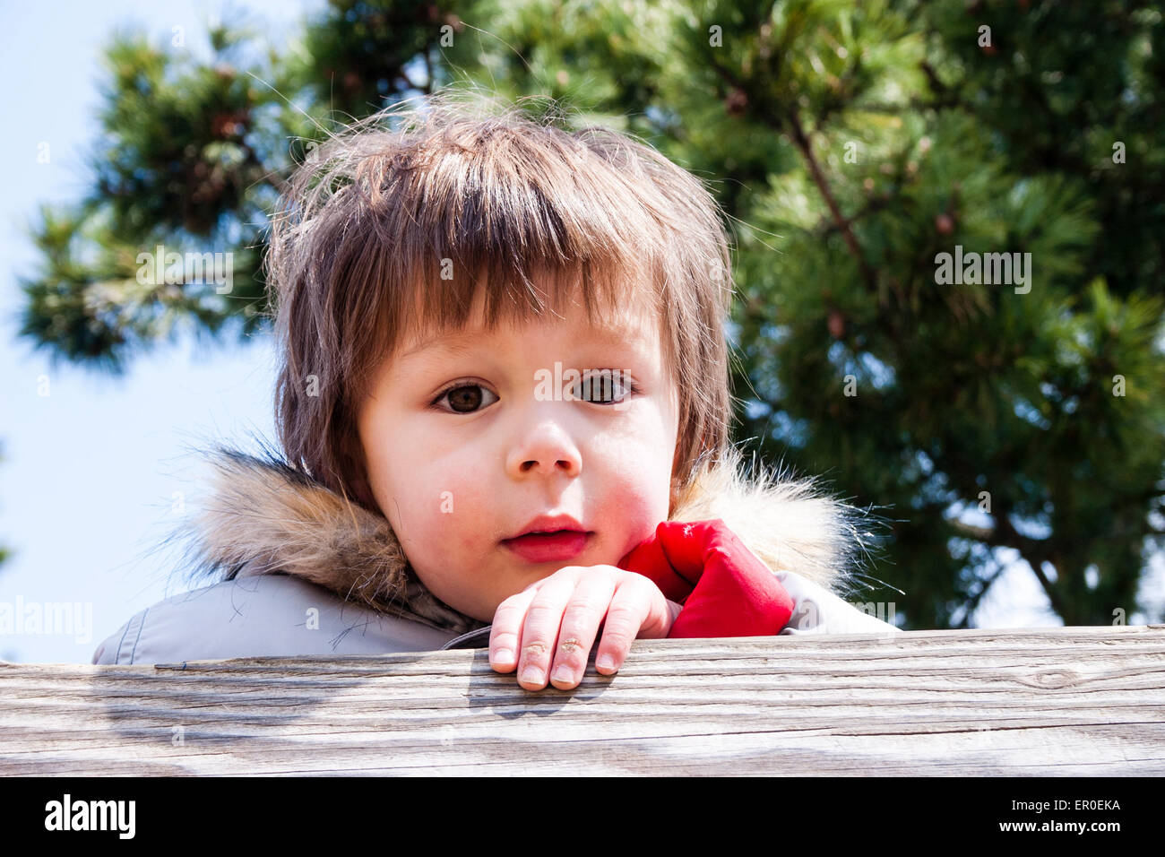 3 or 4 year old Caucasian child, boy. Head & shoulders. Looking over wooden fence, looking at viewer, happy, - Stock Image