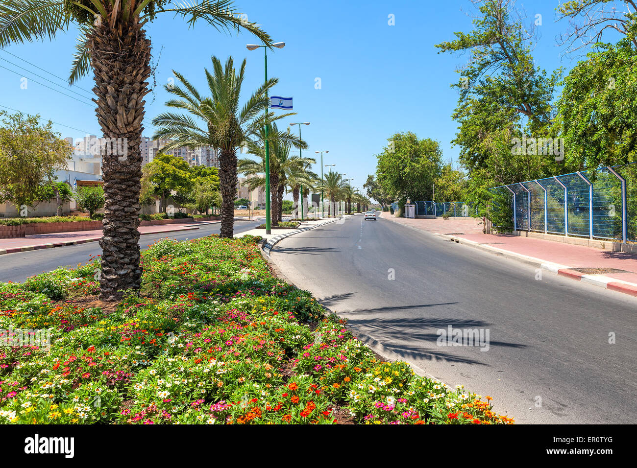 Green flowerbed and palms along urban road in Ashqelon, Israel. - Stock Image