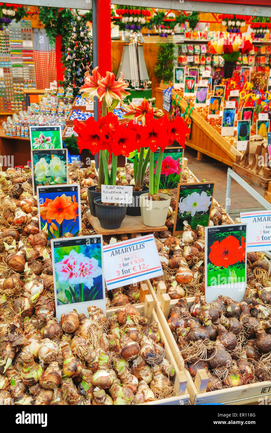 AMSTERDAM - APRIL 17: Boxes with bulbs at the Floating flower market  on April 17, 2015 in Amsterdam, Netherlands. Stock Photo