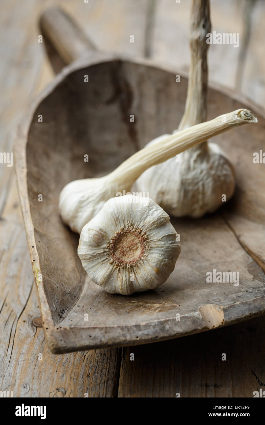 Garlic bulbs on rustic wooden scoop - Stock Image