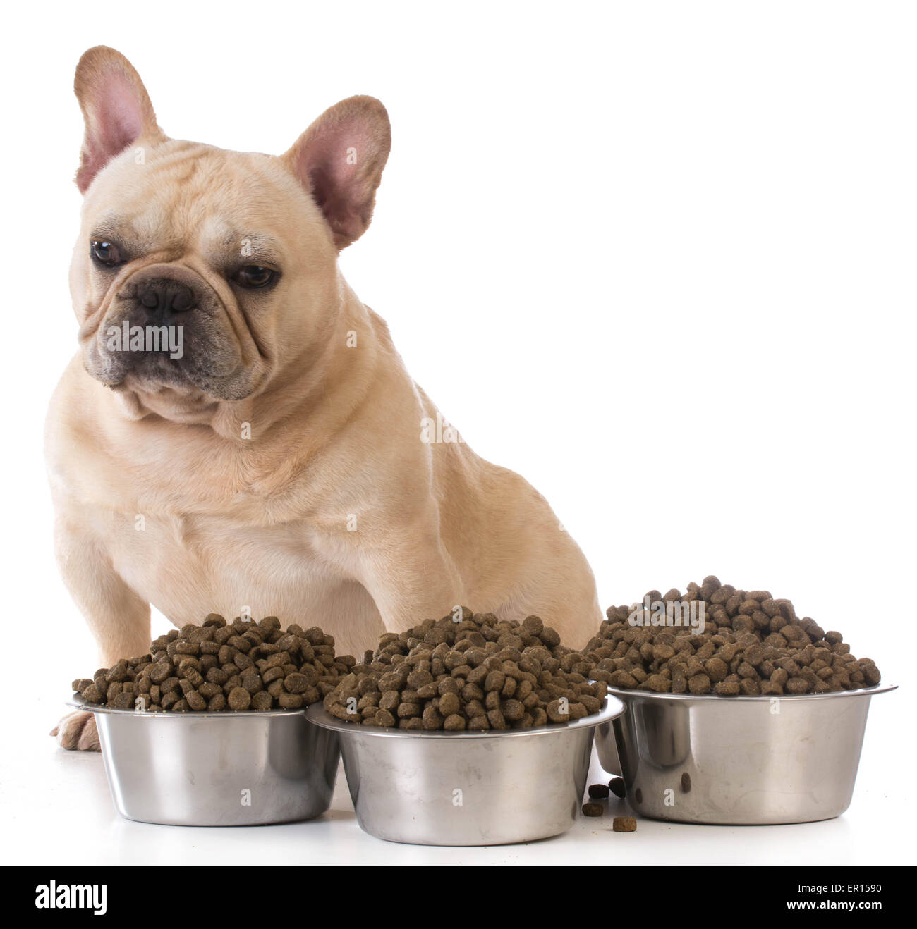 best food for french bulldog best food for french bulldogs food 9398
