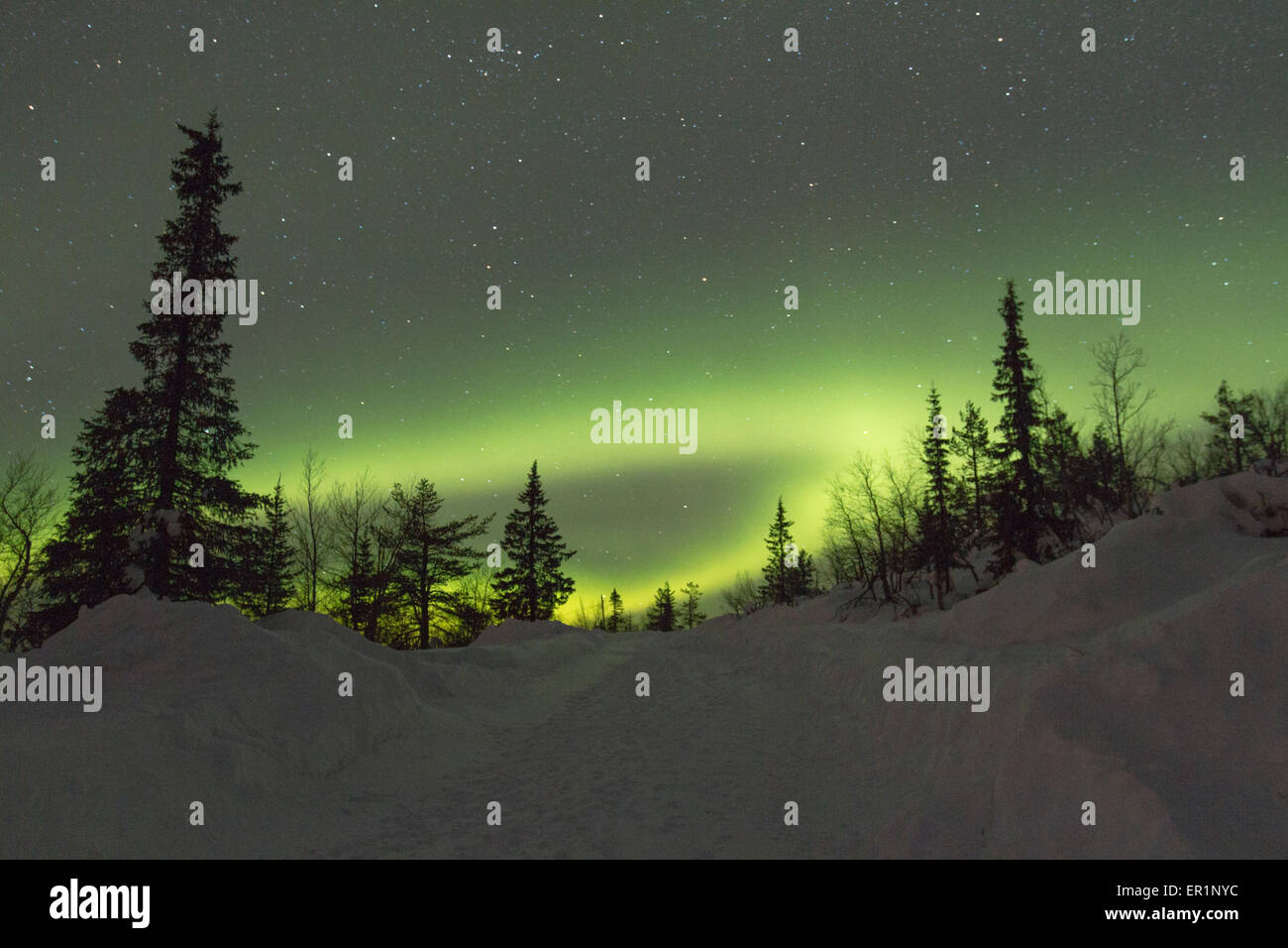 Aurora borealis, Northernlight over winter forestroad in Gällivare in Swedish lapland - Stock Image