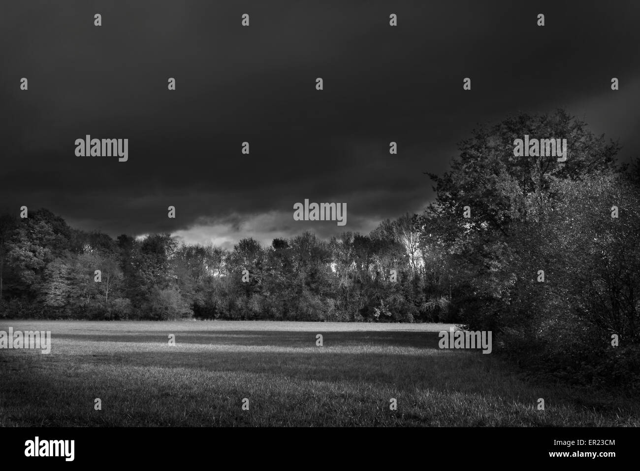 black and white landscape meadow wood trees - Stock Image