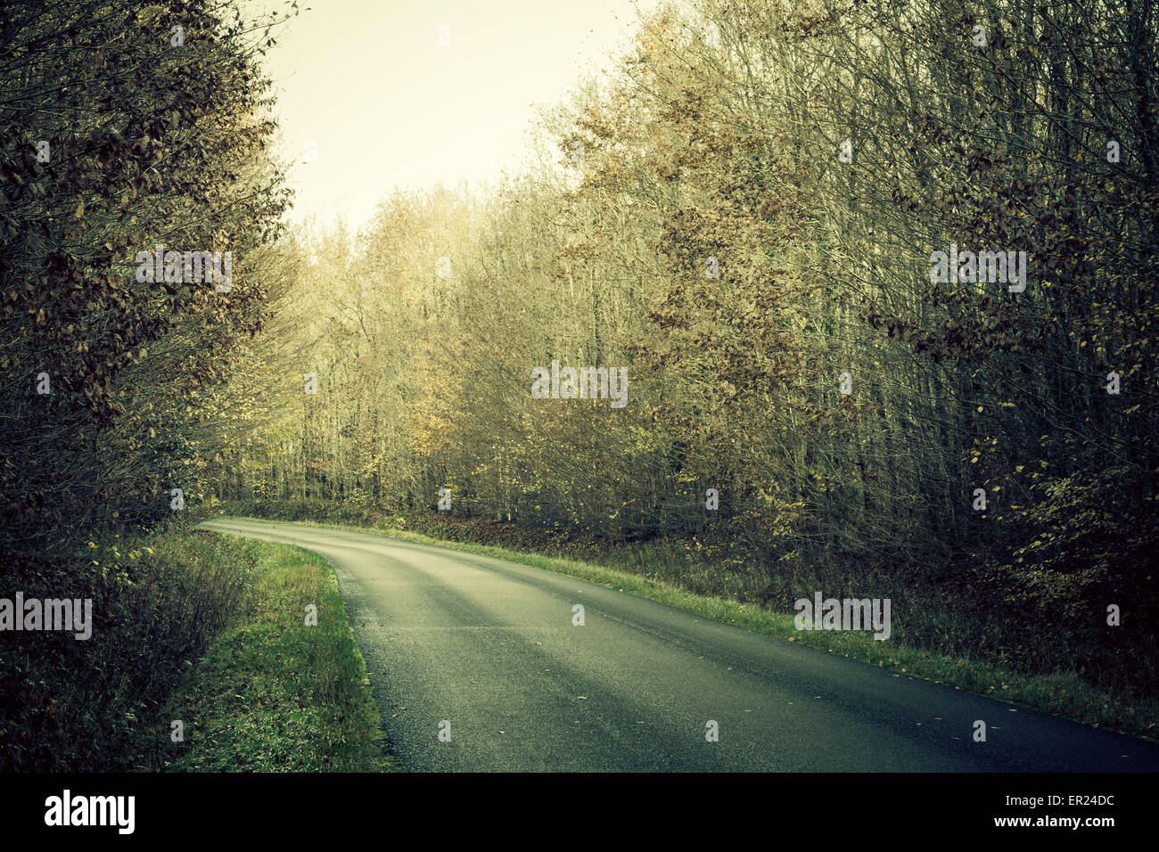road wood trees Indre-et-Loire France - Stock Image