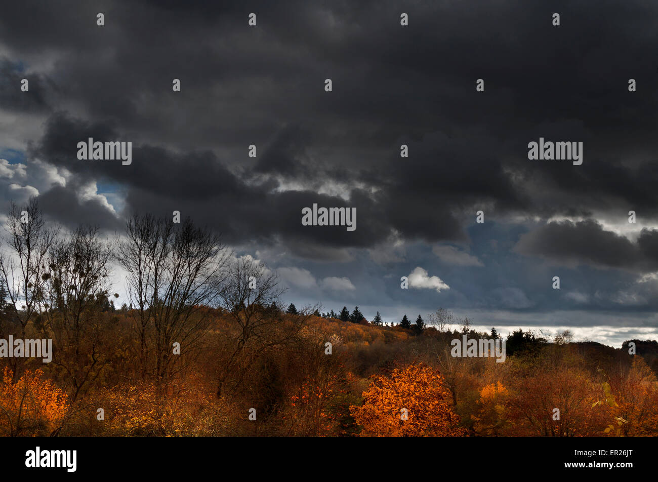 autumn trees cloudy sky france - Stock Image