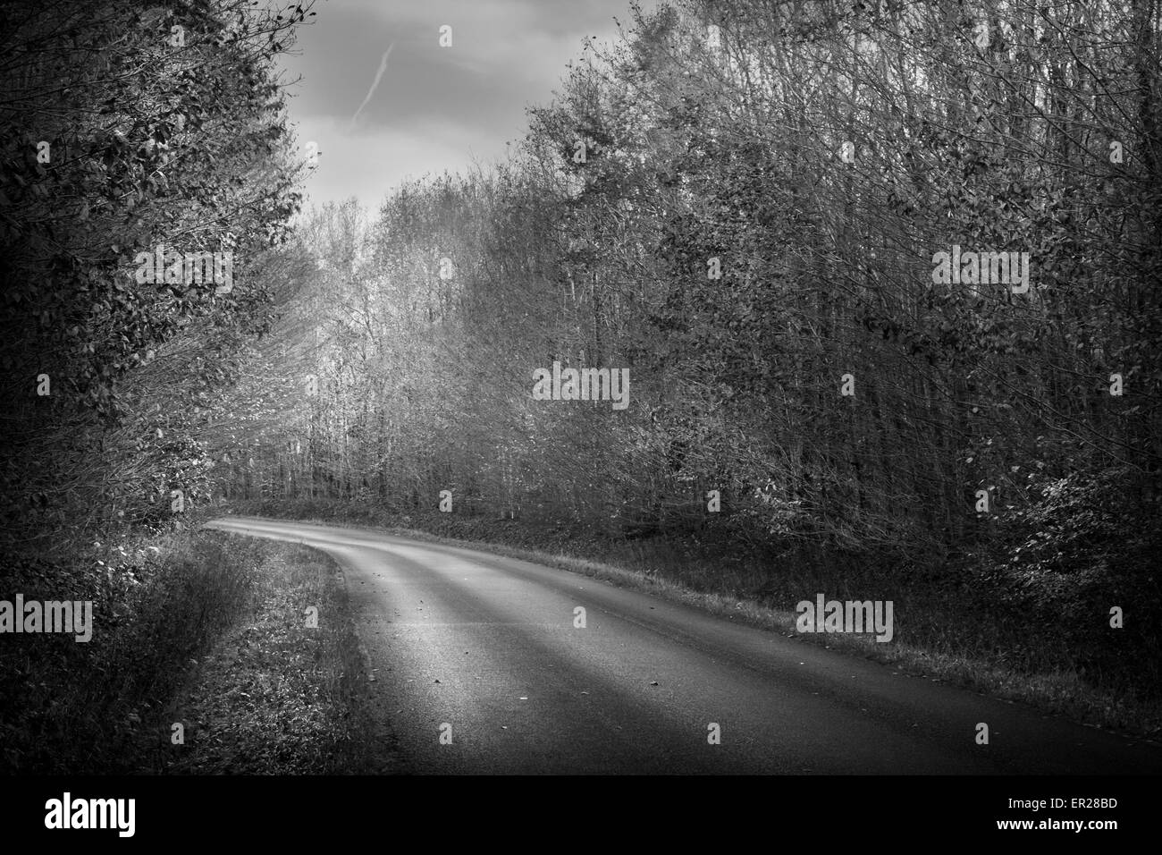 road wood trees Indre-et-Loire France black and white - Stock Image