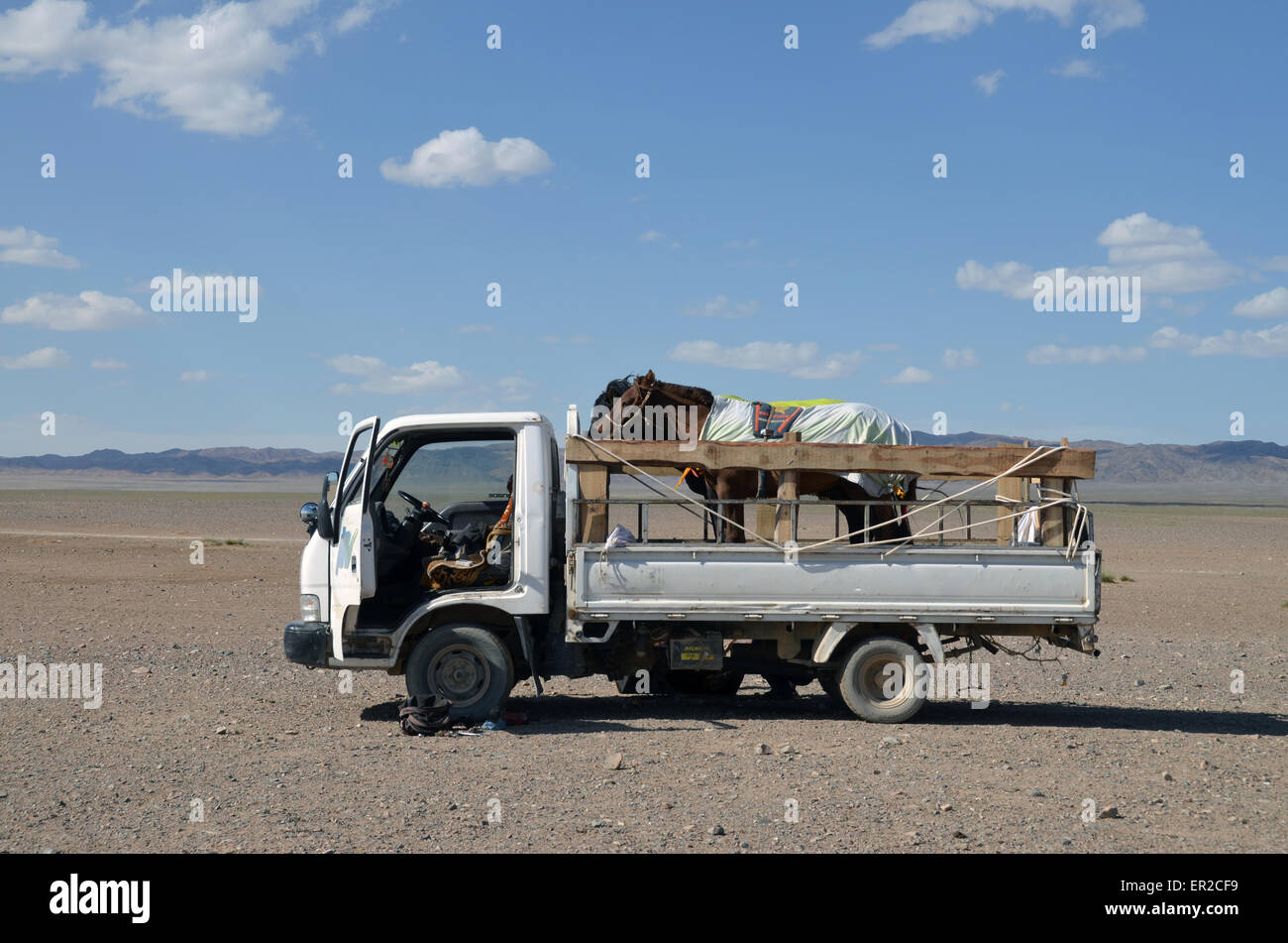 A truck loaded with horses in the Gobi desert, southern Mongolia - Stock Image