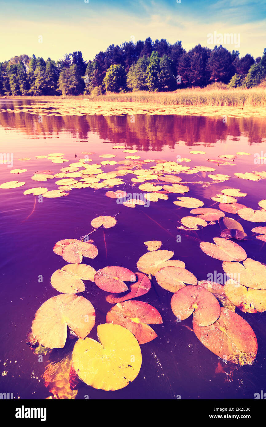 Vintage saturated picture of water lilies in a lake. - Stock Image