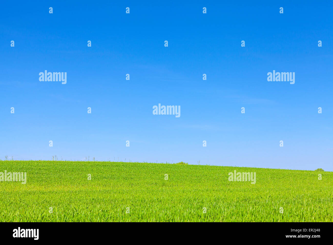 Green field and cloudless blue sky, nature background with space for text. - Stock Image