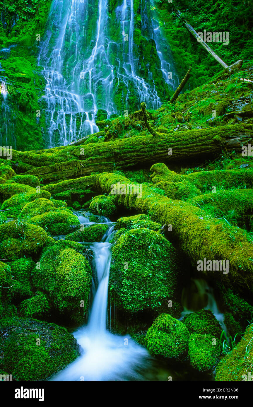 Lower Proxy Falls in Proxy Falls state park in the Three Sisters Wilderness Stock Photo