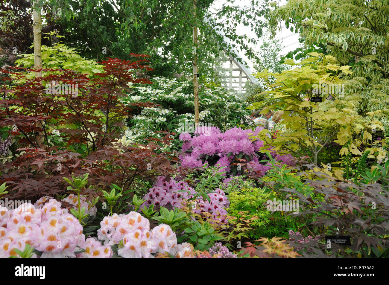 RHS Chelsea Flower Show 2015 - Hillier Nursery display of Woodland Trees and Shrubs, including Rhododendrons and Stock Photo