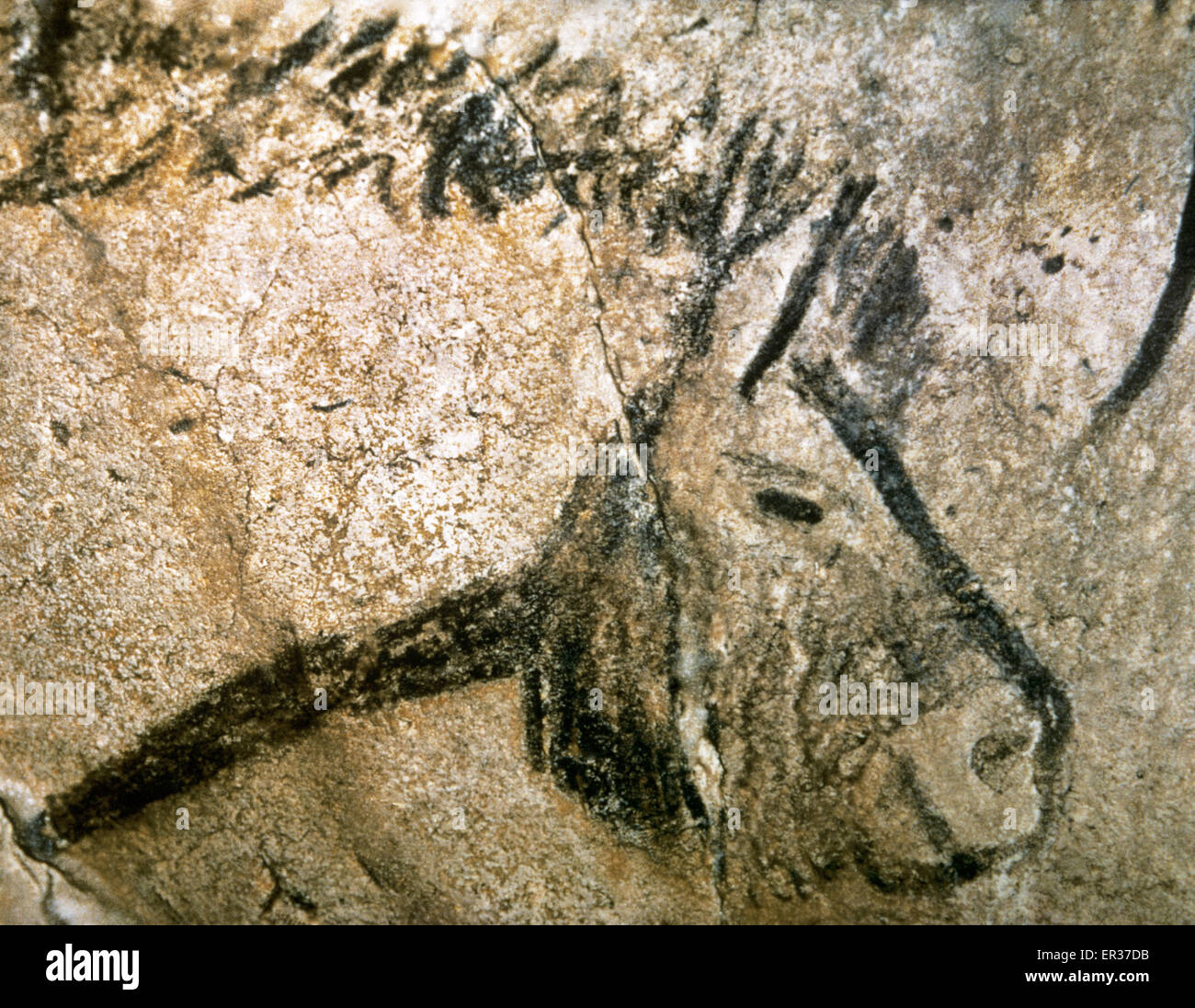 Cave of Niaux. Prehistoric painting. Magdalenian period. Upper Paleolithic. Horse head. France. - Stock Image