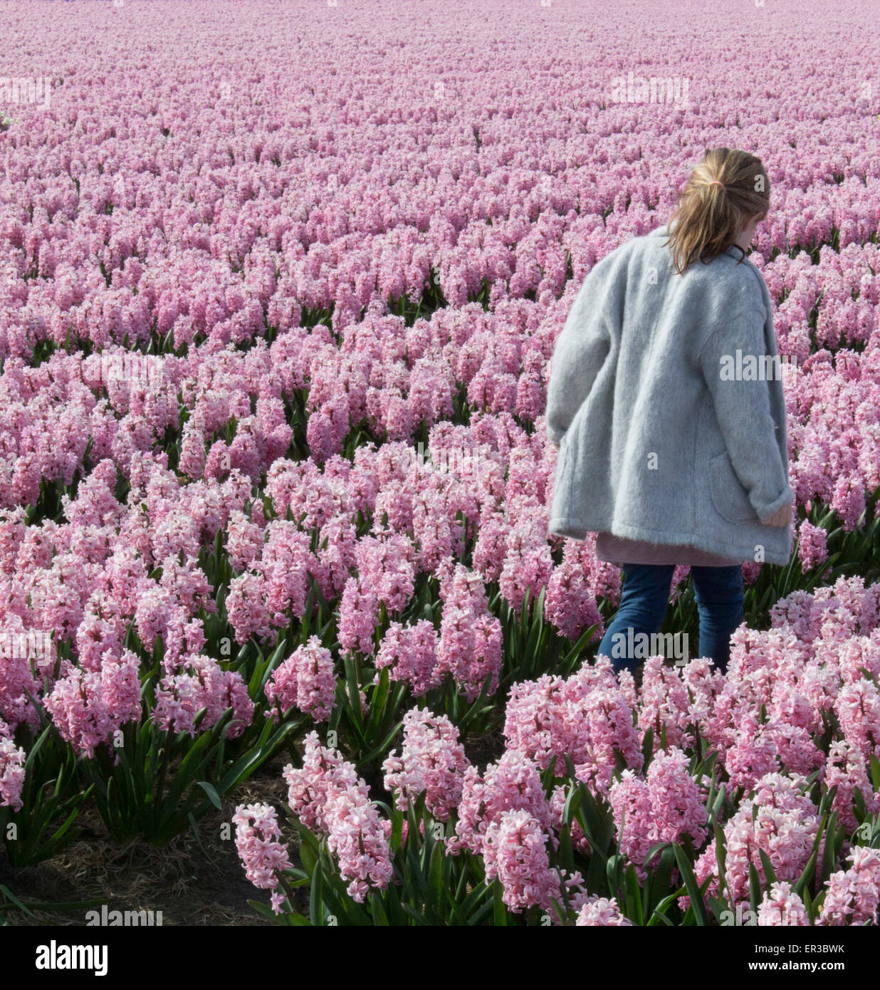 Girl Walking Through A Field Of Pink Hyacinth Flowers Stock Photo