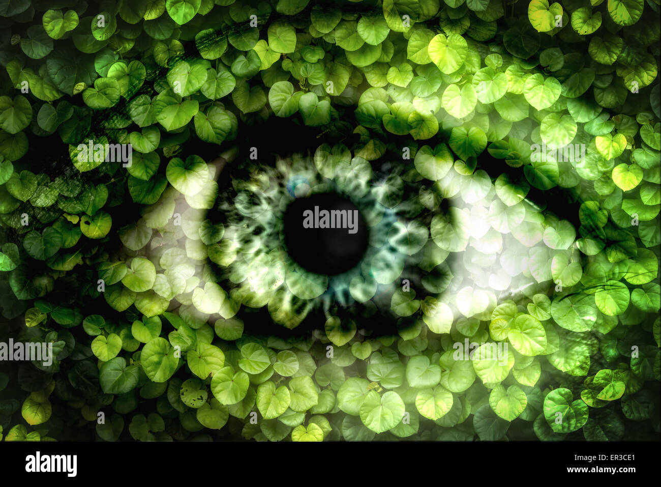 Double exposure of a human eye and wall of ivy - Stock Image