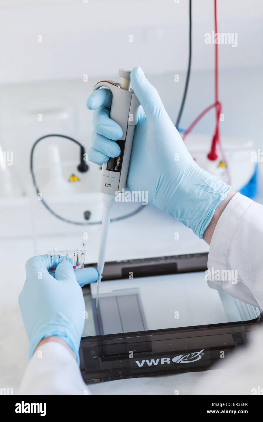 Research in biochemistry and molecular genetics, technician using a pipette to transfer proteins from a vial to - Stock Image
