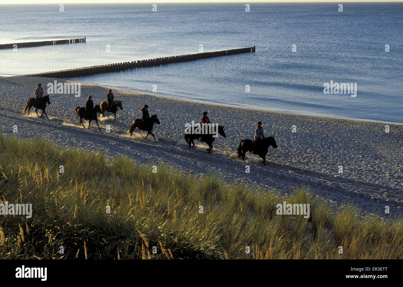 DEU, Germany, Mecklenburg-Western Pomerania, horsemen at the beach at Ahrenshoop at the Baltic Sea.  DEU, Deutschland, Stock Photo