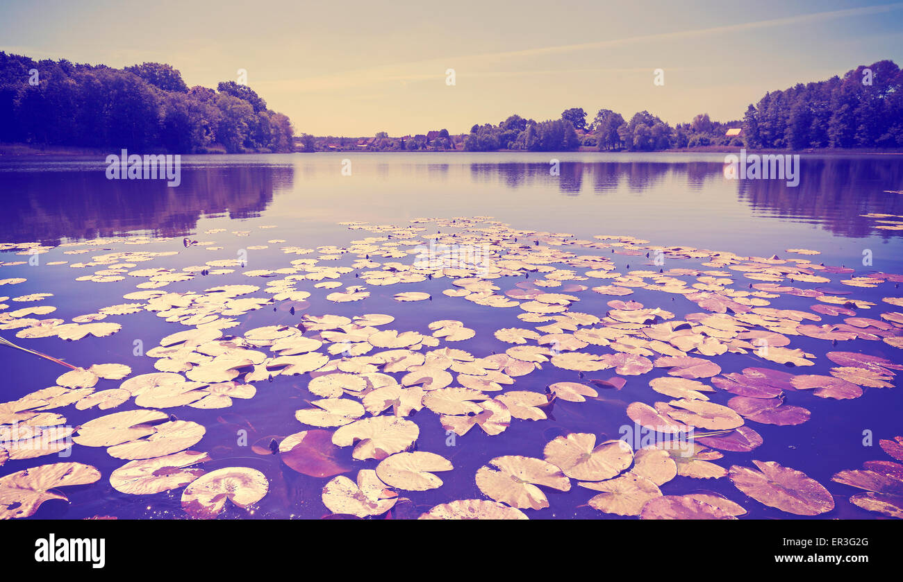 Vintage toned panoramic lake view with water lilies. - Stock Image