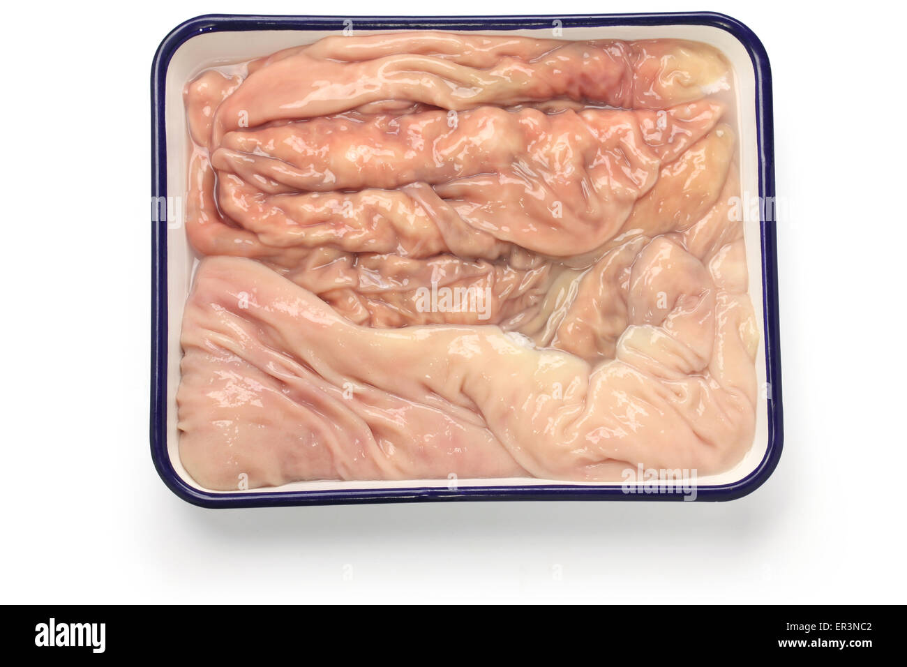abomasum, rennet bag, reed tripe, the fourth stomach of a cow in butcher tray isolated on white background - Stock Image