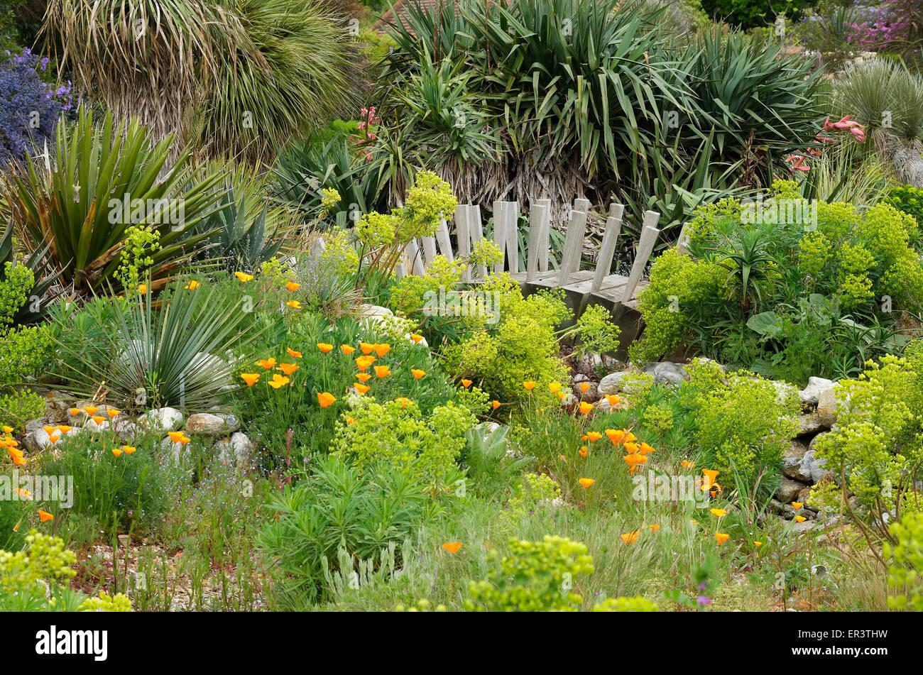 exotic plants in desert style garden, east ruston, norfolk, england - Stock Image