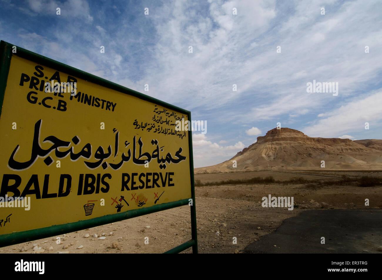 Bald Ibis Nature Reserve in Palmyra Syria - Stock Image