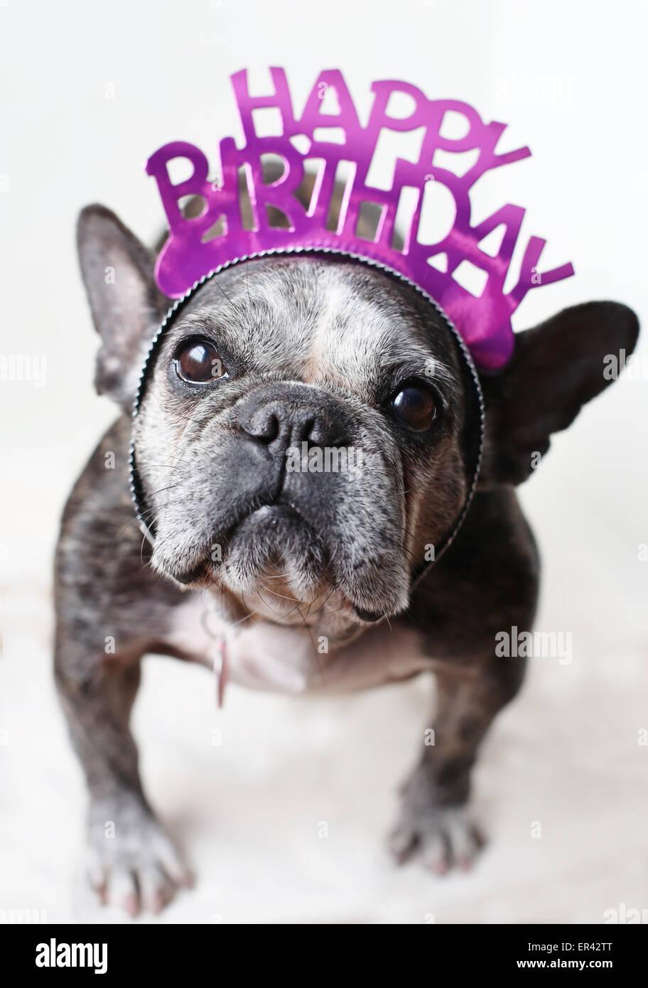 Happy Bulldog birthday pictures rare photo