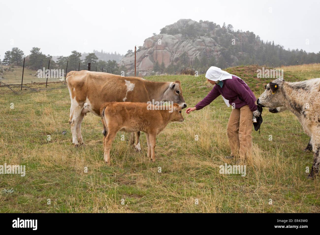Virginia Dale, Colorado - The Abbey of St. Walburga, where Dominican nuns pray and run a cattle ranch. Stock Photo