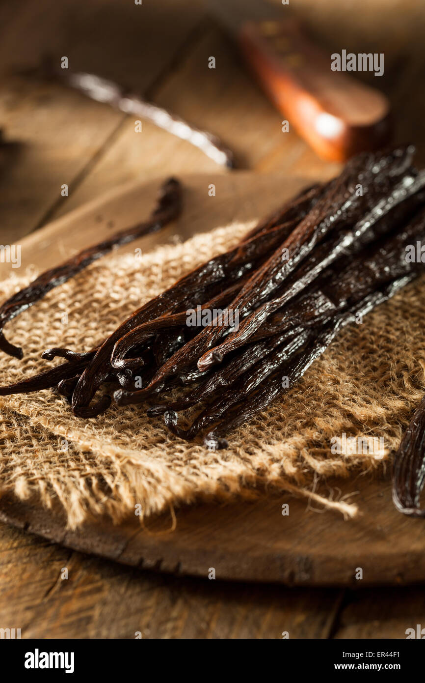 Raw Organic Vanilla Beans Ready to Cut - Stock Image