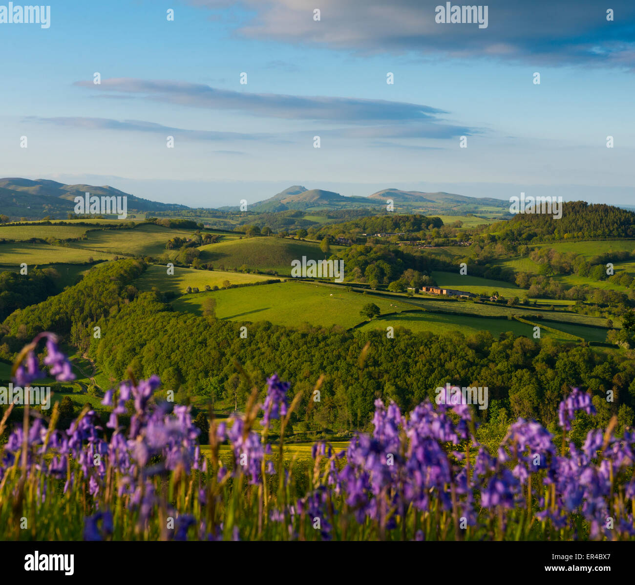 Hopesay, Shropshire, UK. 26th May, 2015. UK Weather: Evening sunlight on the ramparts of Burrow Hill Iron Age hill - Stock Image