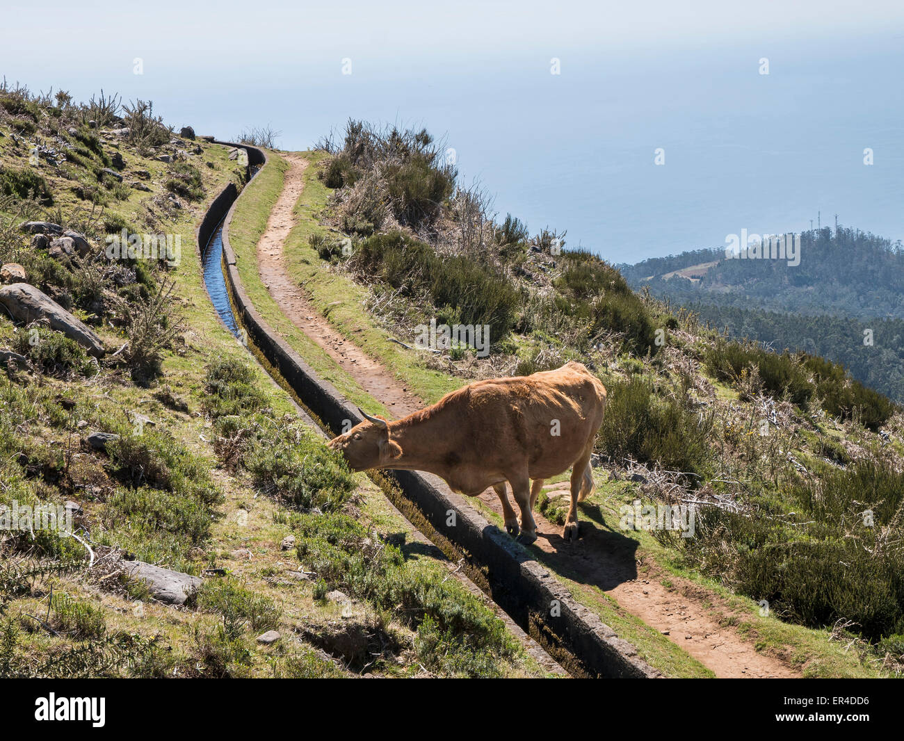 Levada, Central Madeira, Portugal - Stock Image