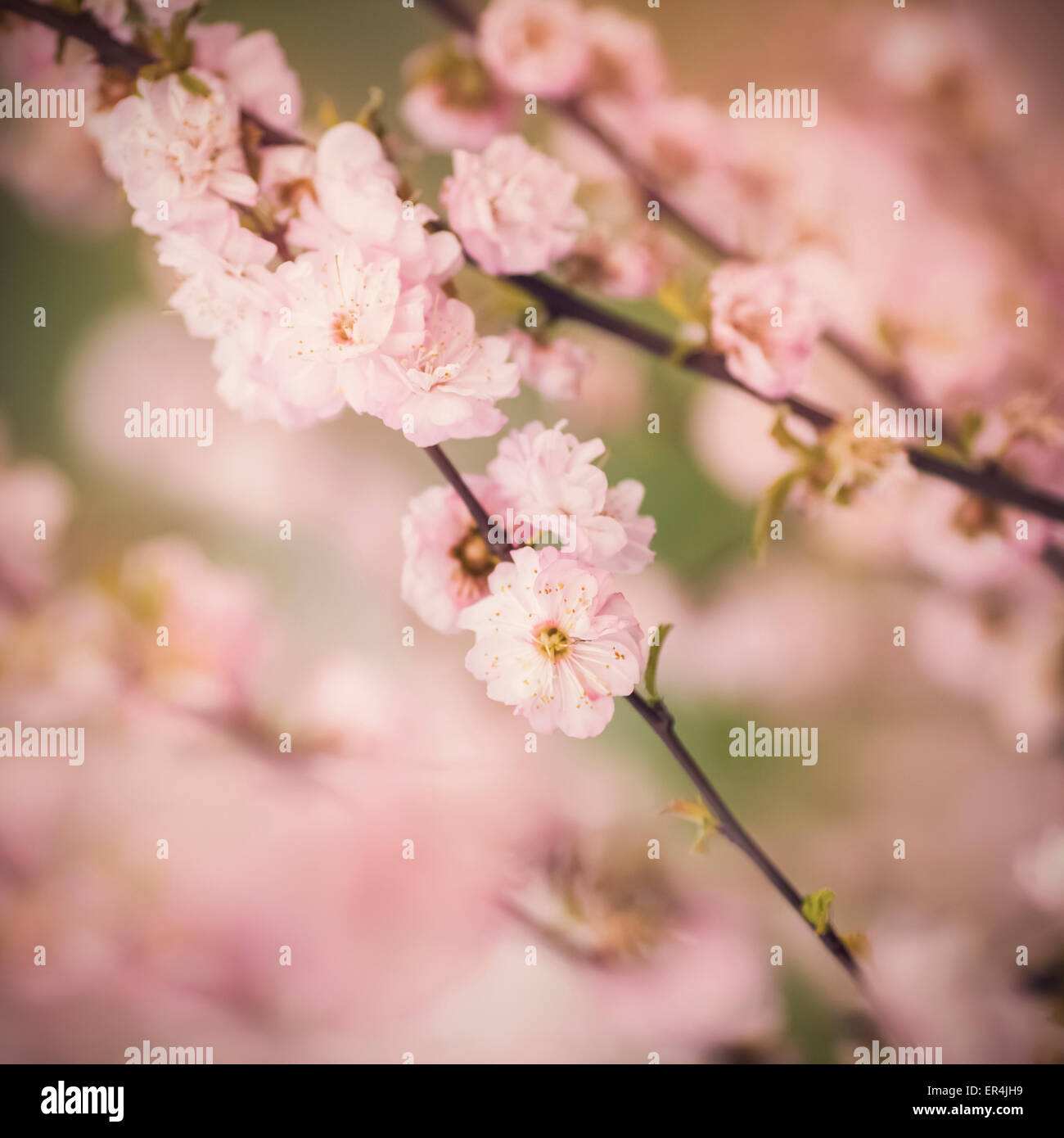 Beautiful flowers with shallow focus - Stock Image