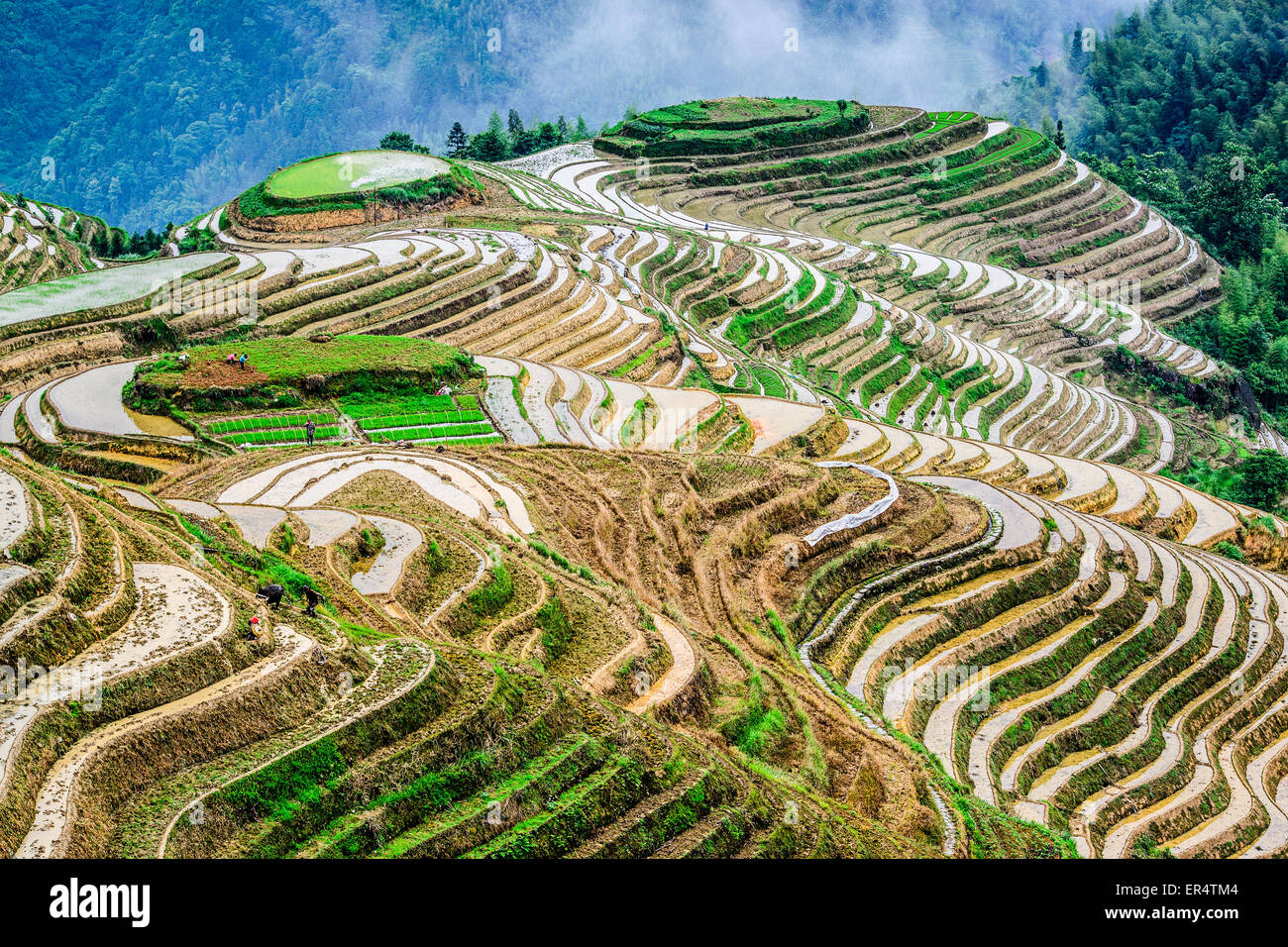 Yaoshan Mountain, Guilin, China hillside rice terraces landscape. - Stock Image