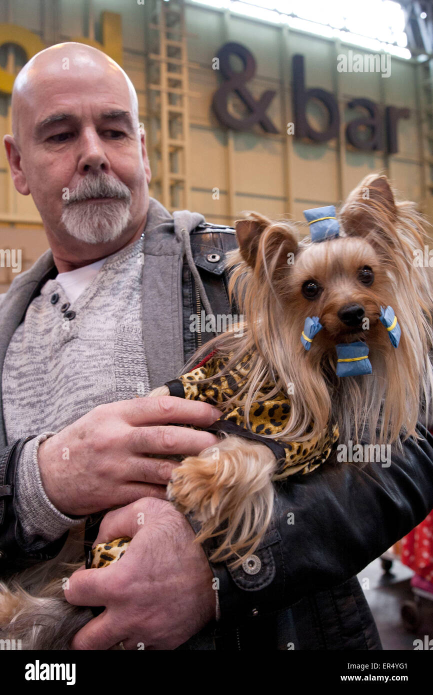 Man holding Yorkshire terrier. Crufts 2014 at the NEC in Birmingham, UK. 8th March 2014 - Stock Image