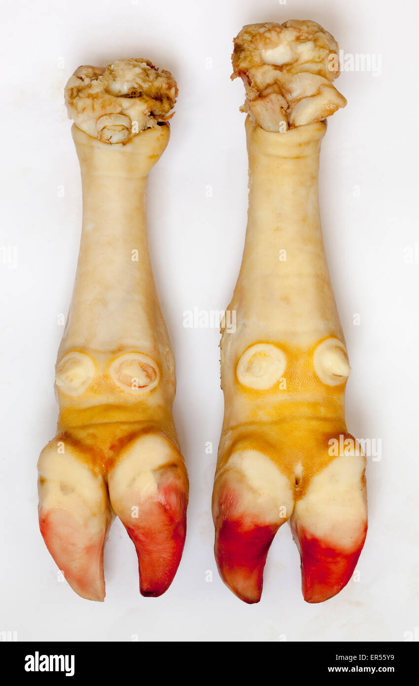 Cows Feet or Hooves prepared for cooking - Stock Image