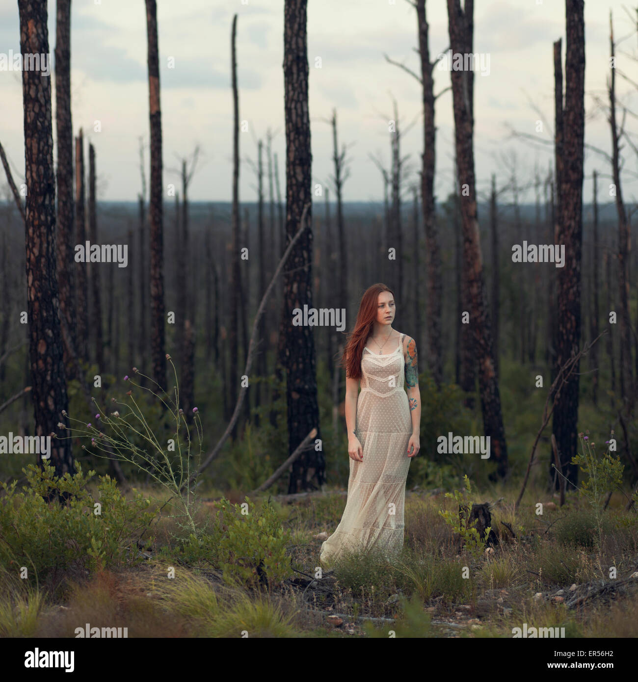 Woman stands in field recovering from forest fire - Stock Image