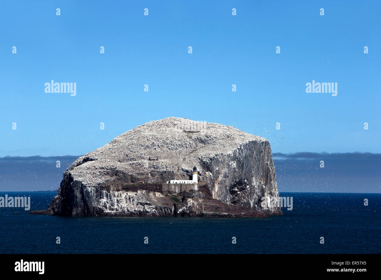 A daytime view from the sea of the island of Bass Rock near North Berwick in the Firth of Forth showing the nesting - Stock Image