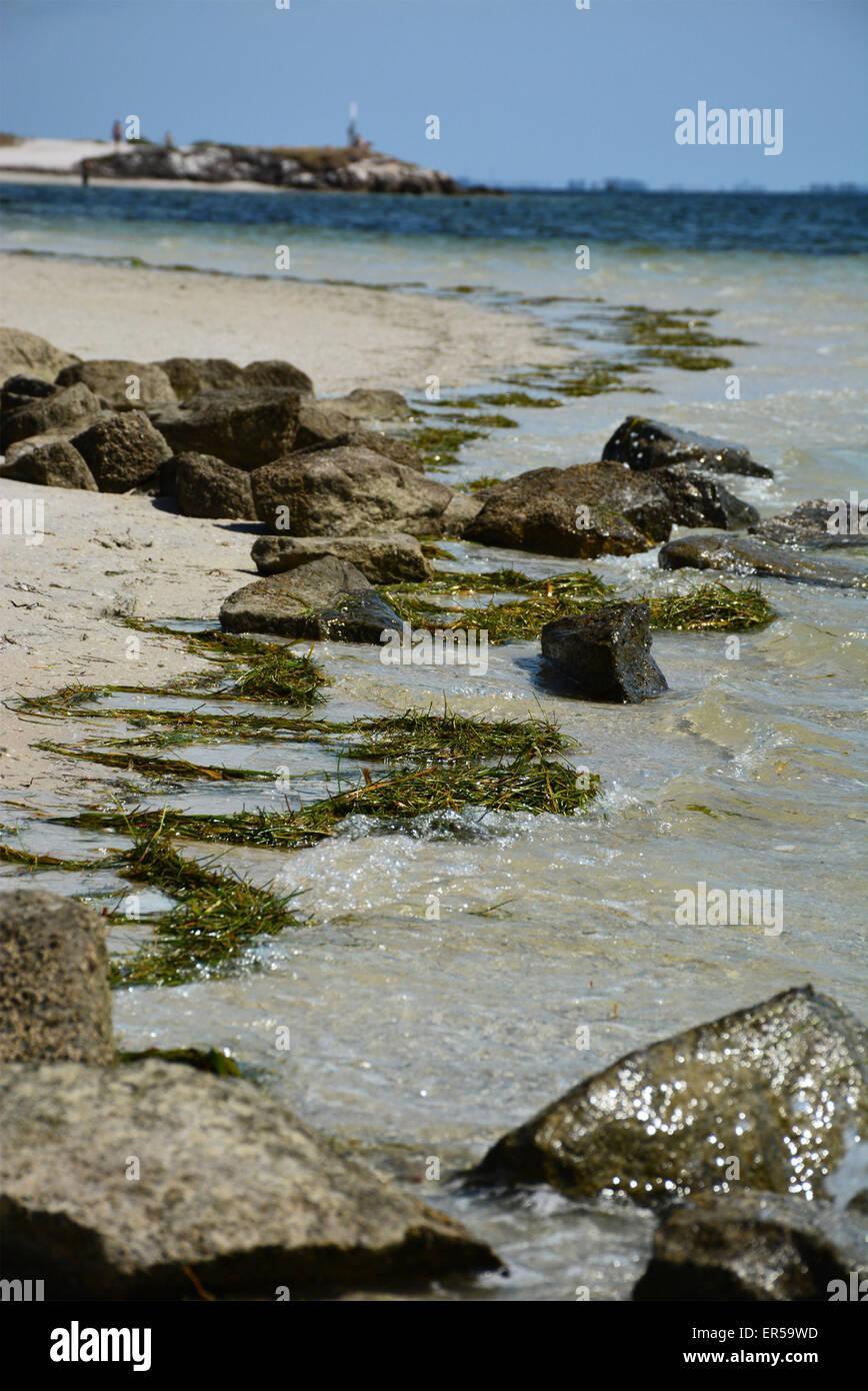 Trail Of Rocks At Fred Howard Beach Tarpon Springs Pinellas County Stock Photo Alamy Tvma • documentaries, news • tv series (2019). https www alamy com stock photo trail of rocks at fred howard beach tarpon springs pinellas county 83096089 html
