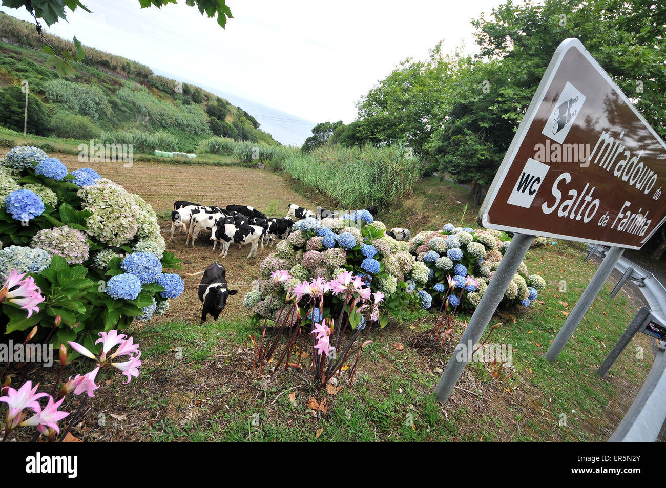At view point Salto da Farinha, northeast coast, Island of Sao Miguel, Azores, Portugal - Stock Image
