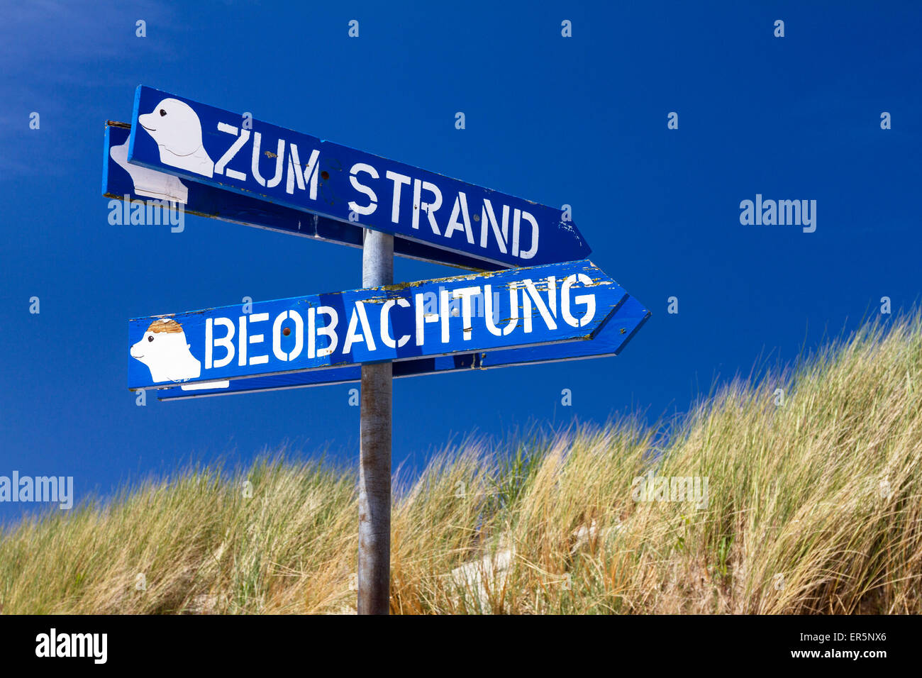 Signposts to the beach and seal observation point, Osterhook, Langeoog Island, North Sea, East Frisian Islands, - Stock Image