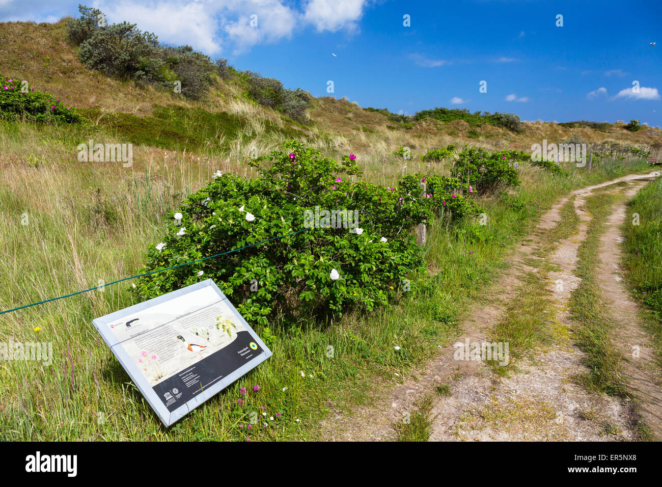 Flinthoern nature trail, Dunes, Langeoog Island, North Sea, National Park, East Frisian Islands, East Frisia, Lower Stock Photo