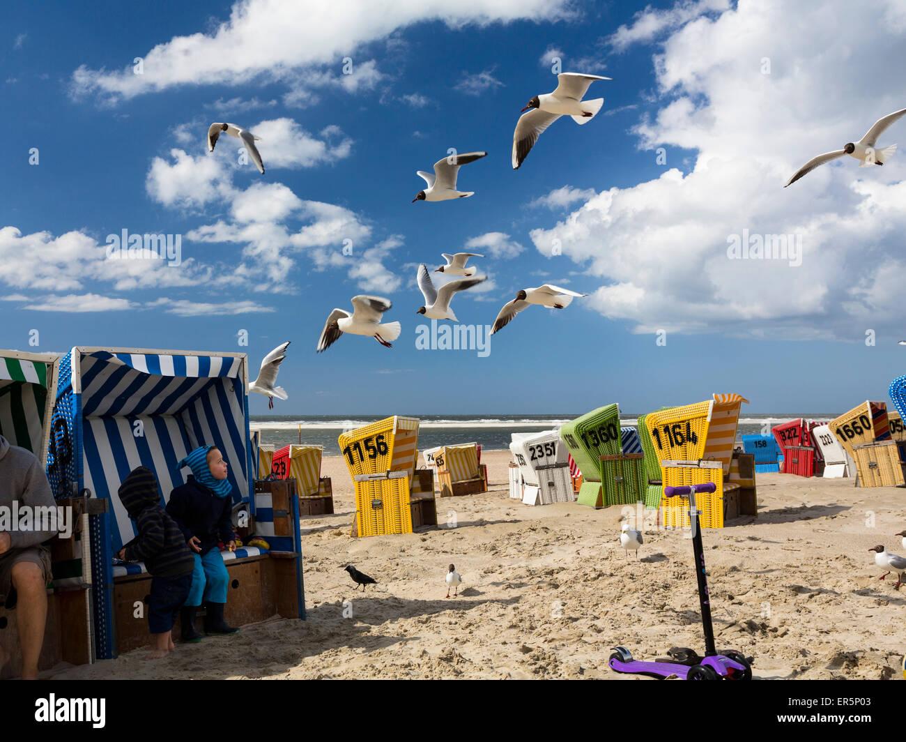Children feeding the gulls, Larus ridibundus, Langeoog Island, North Sea, East Frisian Islands, East Frisia, Lower - Stock Image