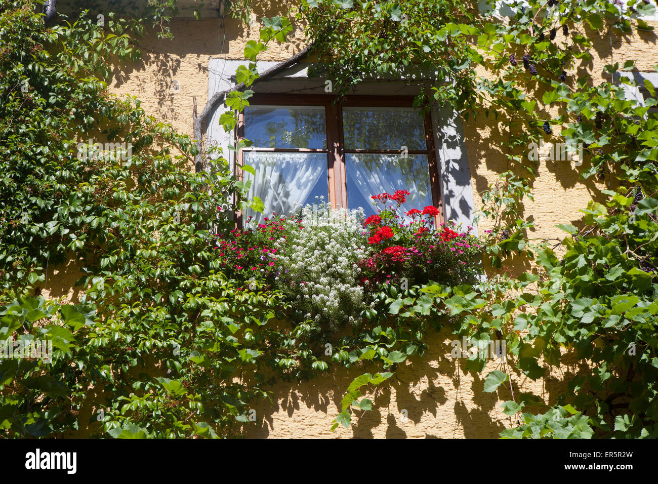 Flowers in a window box in the historical center of Meersburg, Lake Constance, Swabia, Baden-Wuerttemberg, Germany, - Stock Image