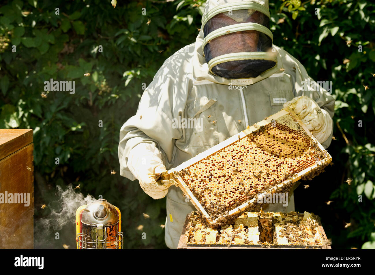 Beekeeper with honeycombs, Freiburg im Breisgau, Black Forest, Baden-Wuerttemberg, Germany - Stock Image