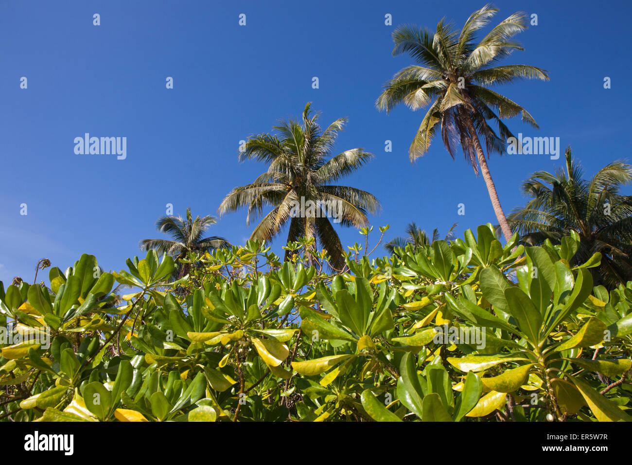Palm trees on the beach, Bang Saphan, Prachuap Khiri Khan Province, Thailand, Asia - Stock Image