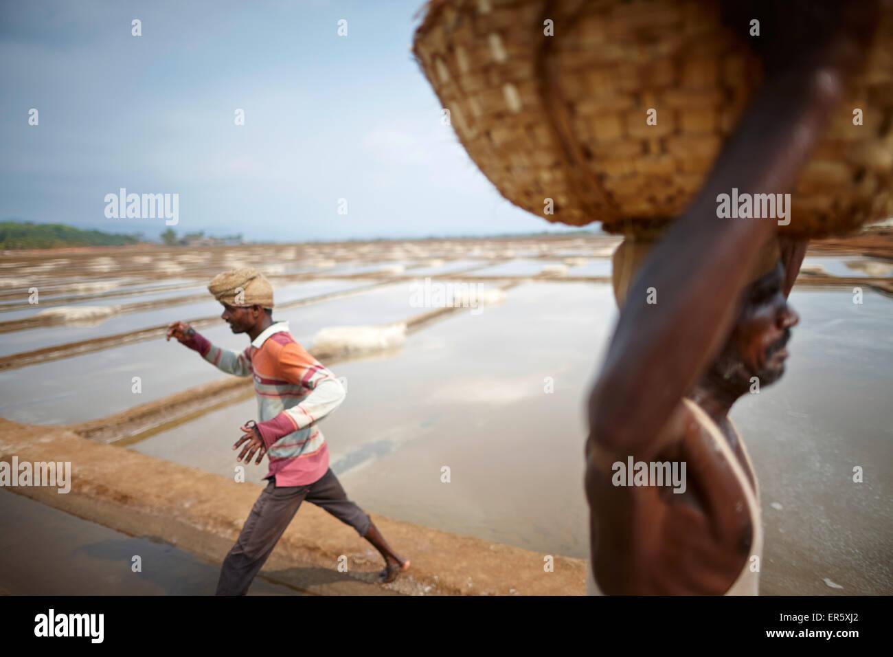 Men working at a salt mine, Grama Panchayat lagune, Gokarna, Karnataka, India - Stock Image
