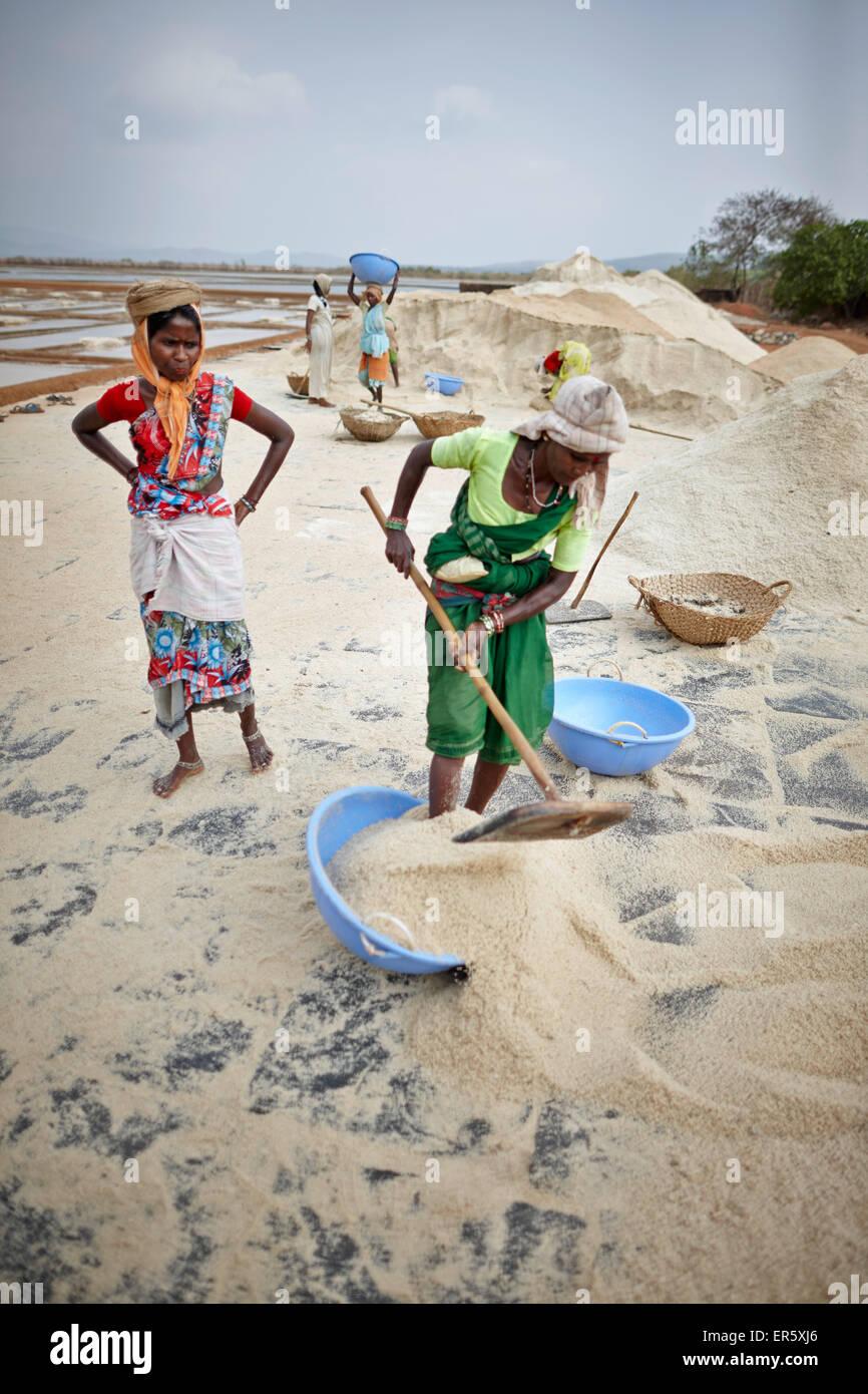 Women working at a salt mine, Grama Panchayat lagune, Gokarna, Karnataka, India - Stock Image